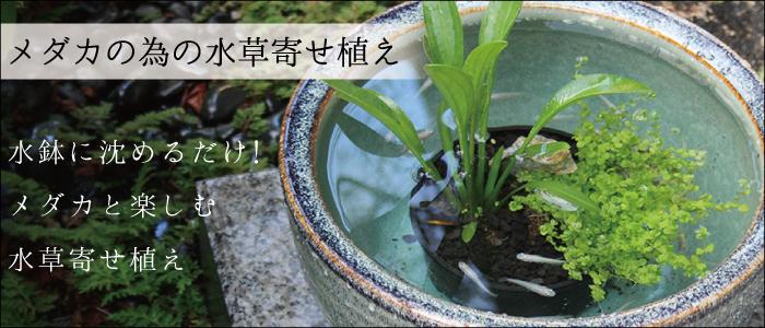 杜若園芸 とじゃくえんげい メダカの為の水草寄せ植え 沈めるだけ!