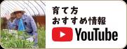 youtube おすすめ情報や育て方