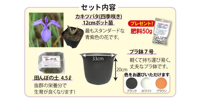 杜若園芸 カキツバタ栽培セット