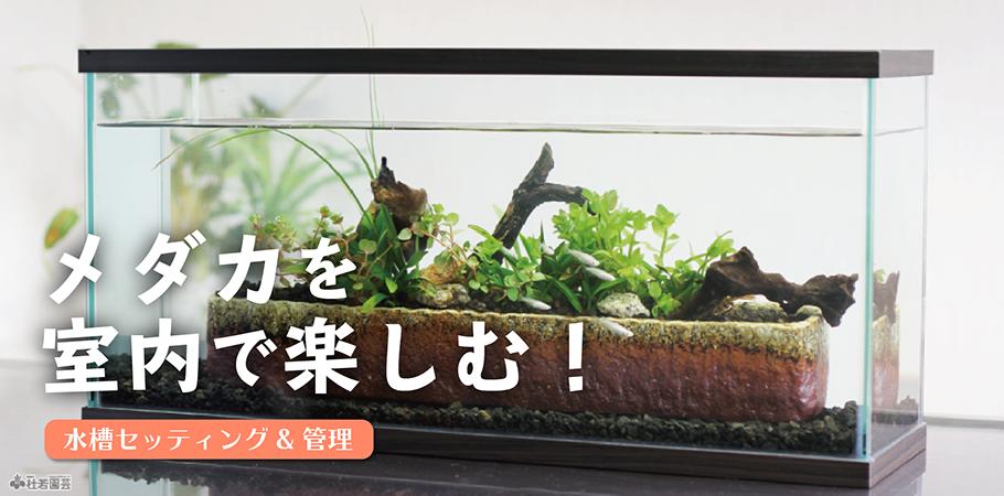 main-image_shitunai.png