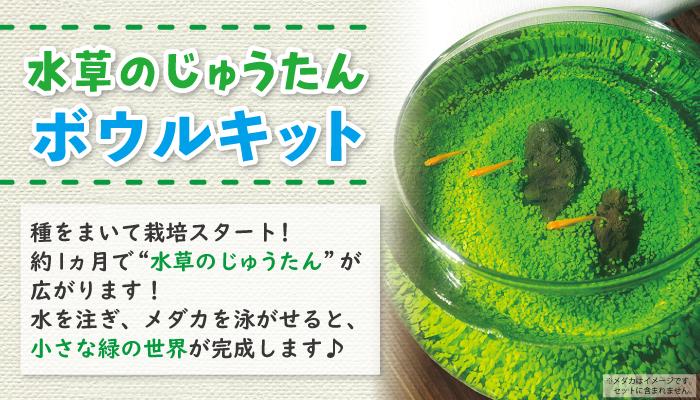 水草のじゅうたんボウルキット 水草の種(タネ、たね)から育てる メダカ飼育にもオススメ!