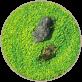 水草のタネ