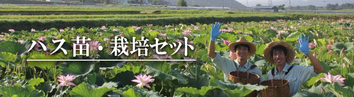 ハス苗・栽培セット