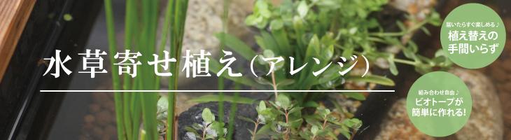 水草寄せ植え(アレンジ)
