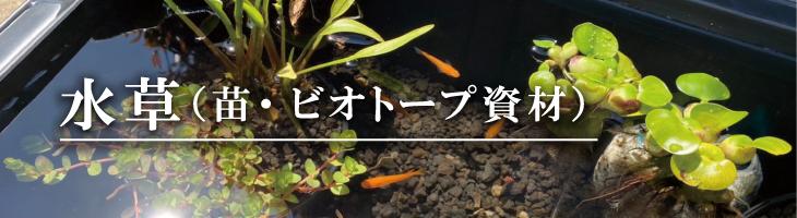 水草(苗・ビオトープ資材)