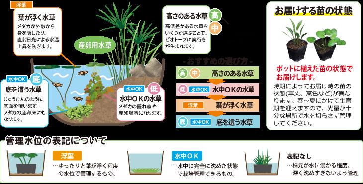 水草の特徴
