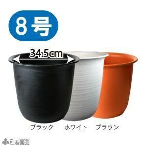 蓮麺10袋セット