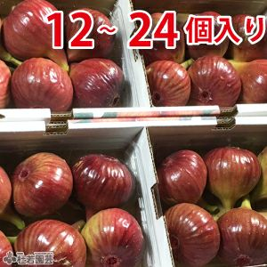 【京都・城陽特産 秋の味覚】   特選いちじく (24個入)
