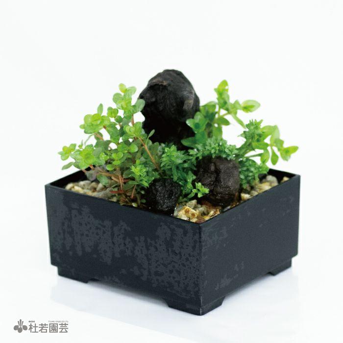 ネオライト入り 水中箱庭水草(小)