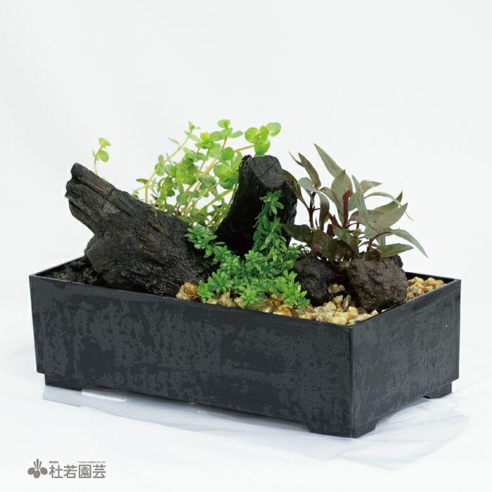 ネオライト入り 水中箱庭水草(大)